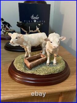 Border Fine Arts BO272 Pair Of Charolais Calves