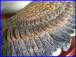 Border Fine Arts Sea Eagle B1189 Super Rare Limited Edition Number 73/350