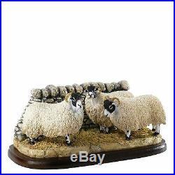 Border Fine Arts Studio Swalesdale Sheep A27062